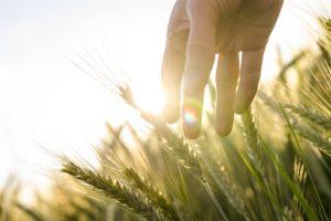 Agri Food Pilot Canada